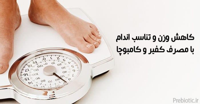 کاهش وزن با پروبیتیک
